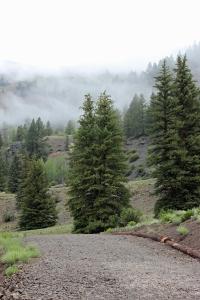 Woodlake-Fog