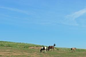 Heartland-Horses1