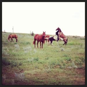 HorsesAtPlay