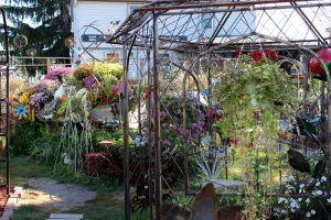AmanaWalkingTour-Garden