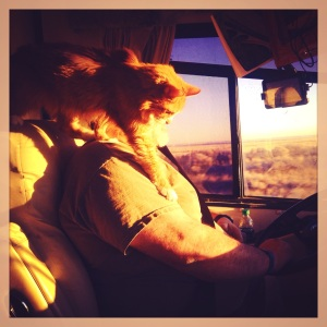 travel, photography, Instagram, iPhoneography, Charlie, cats, RVing with pets, pets on the road, traveling with pets