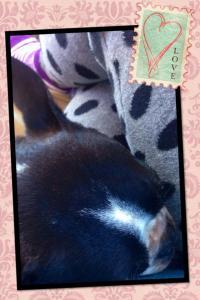 Boston Terrier, RV, driving, co-pilot, dog, Sadie, polka dots, striped socks, travel, photography
